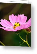 Another Cosmos Greeting Card