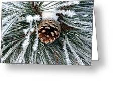 Another Frosty Pine Cone Greeting Card