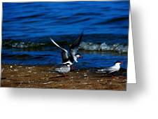 Another One Take A Tern Greeting Card