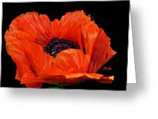 Another Red Poppy Greeting Card
