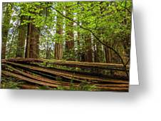 Another Split Redwood Greeting Card
