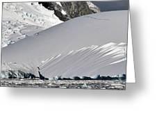 Antarctic Bliss  Greeting Card