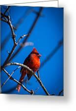 Ante Meridiem Cardinalis Cardinalis Greeting Card