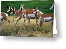 Antelope 1 Greeting Card