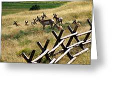 Antelope 2 Greeting Card