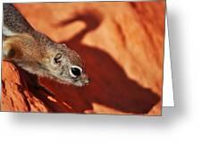 Antelope Ground Squirrel II Greeting Card