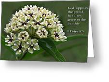 Antelope Horns Wildflower With Scripture Greeting Card