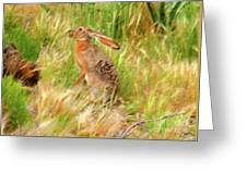 Antelope Jackrabbit Greeting Card