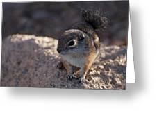 Antelope Swirl  Greeting Card