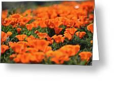 Antelope Valley California Poppies Greeting Card
