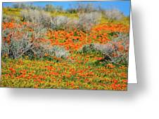 Antelope Valley Poppies Greeting Card
