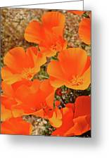 Antelope Valley Poppy Portrait Greeting Card