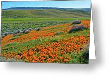 Antelope Valley Poppy Reserve Greeting Card