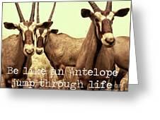 Antelopes Greeting Card