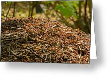 Anthill In Forest Greeting Card