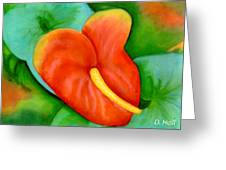 Anthurium Flowers #228 Greeting Card