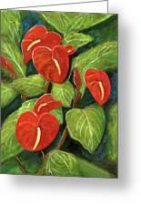 Anthurium Flowers #231 Greeting Card