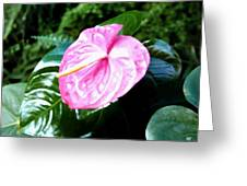 Anthurium Greeting Card