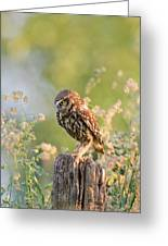 Anticipation - Little Owl Staring At Its Prey Greeting Card