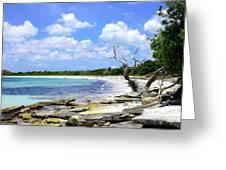 Antigua Shoreline Greeting Card