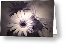 Antique Delicate Daisies  Greeting Card