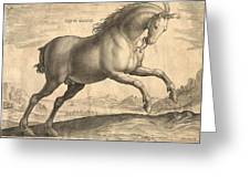 Antique Horse Engraving - Equus Regius Greeting Card