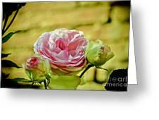 Antique Pink Rose Greeting Card