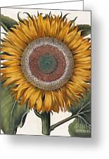 Antique Sunflower Print Greeting Card