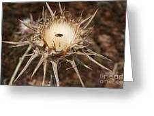 Antithesis - A Fly On A Thorn   Greeting Card
