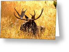 Antlers In The Golden Grass Greeting Card