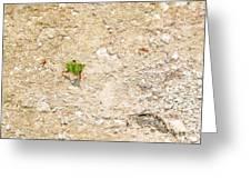 Ants At Oxtankah Greeting Card