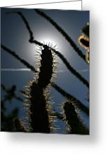 Anza Borrego Cholla Sillouette Greeting Card