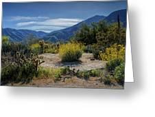 Anza-borrego Desert State Park Desert Flowers Greeting Card
