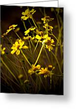 Anza Borrego Desert Sunflower 4 Greeting Card