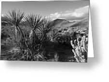 Anza-borrego Yuccas Greeting Card