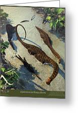 Apatosaurus From Above Greeting Card