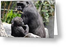 Apes Greeting Card