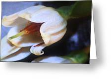 Aphids Greeting Card