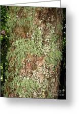 Appalachian Arbor Flora Greeting Card