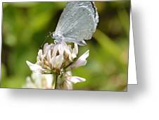 Appalachian Azure Greeting Card