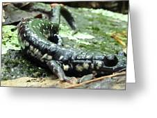 Appalachian Slimy Salamander Greeting Card