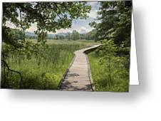 Appalachian Trail - Out Into The Light Greeting Card