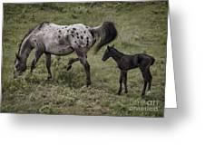 Appaloosa And Baby Greeting Card
