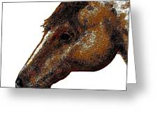 Appaloosa Eye Greeting Card