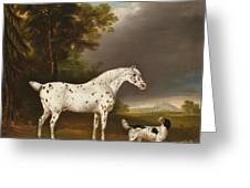 Appaloosa Horse And Spaniel Greeting Card