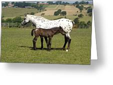 Appaloosa Mare And Foal Greeting Card