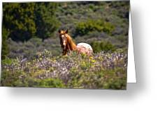 Appaloosa Mustang Horse Greeting Card