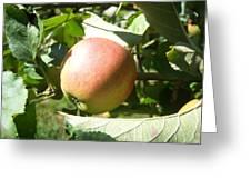 Apple 101 Greeting Card