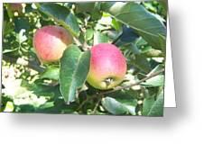 Apple 102 Greeting Card