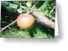 Apple 104 Greeting Card
